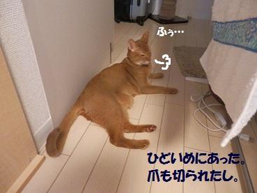 P5095434.jpg