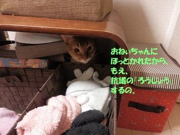 P5190141.jpg