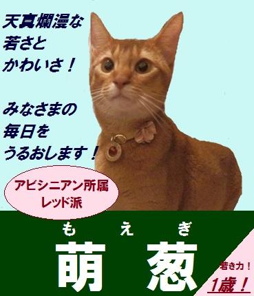 P6110464_20130621224750.jpg