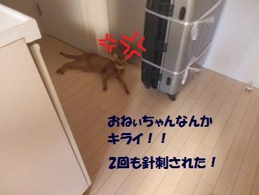 P6220561.jpg