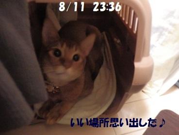 P8111372.jpg