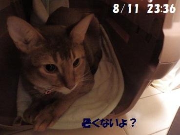 P8111373.jpg