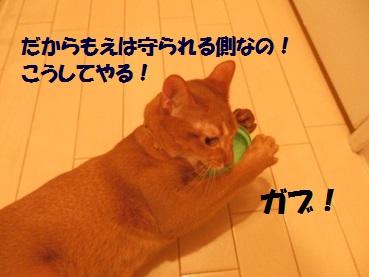 P8131395.jpg