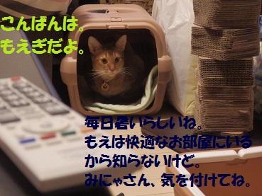 P8181475.jpg