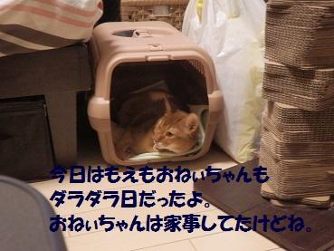 P8181477.jpg