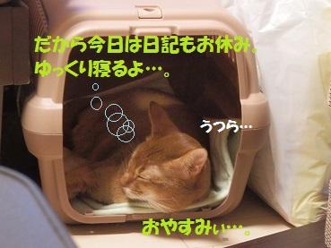 P8181478.jpg