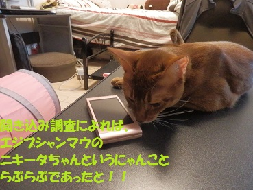 P9081757-3.jpg