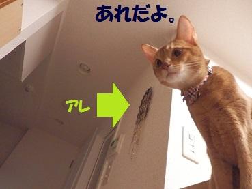 PA012103.jpg