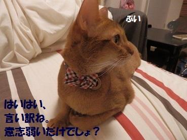 PA122259.jpg