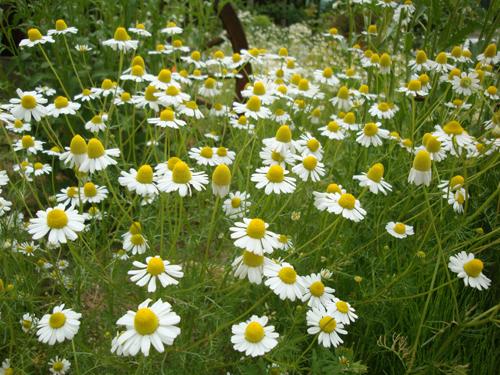 20120521_この花、好きや~