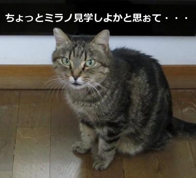 borse6730_20121125191501.jpg