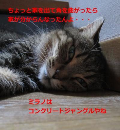 borse6731_20121125192229.jpg