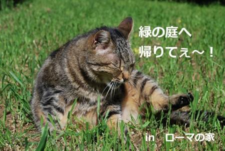 borse6732_20121125192815.jpg