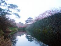 2013_sakura_2.jpg