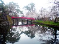 2013_sakura_3.jpg