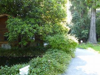 130428池袋の森のトンボ池