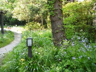 130428池袋の森の小道