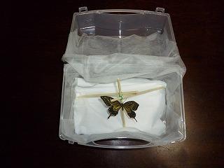 s-130504蝶の飼育ケース