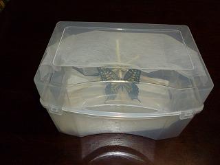 s-130504蝶の飼育ケースⅡ