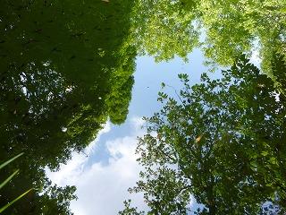 s-130504池に映る池袋の森