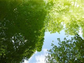 s-130504森と青い空
