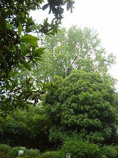 s-20130520小雨の公園