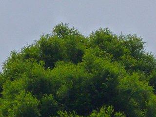 s-20130609池袋の森幸せのフクロウ