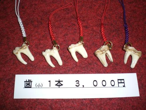 2熊の歯小.JPG