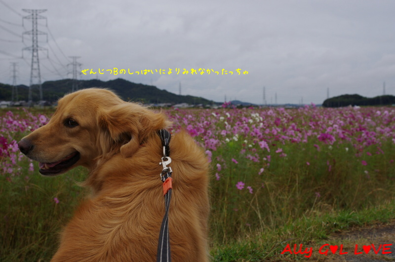 IMGP0410_201311050011377a8.jpg
