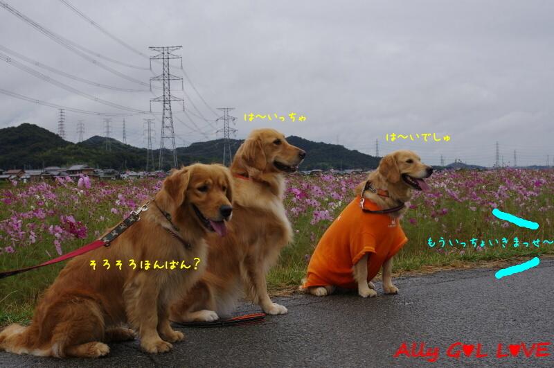 IMGP0415.jpg