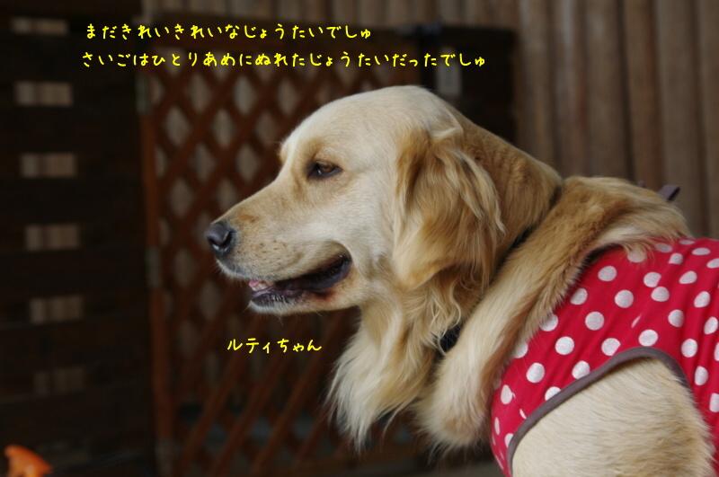 IMGP5640.jpg