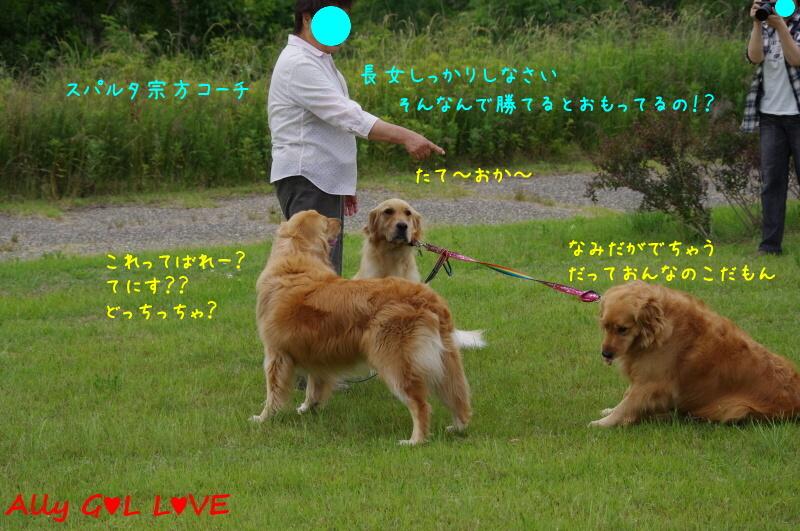 IMGP7295.jpg