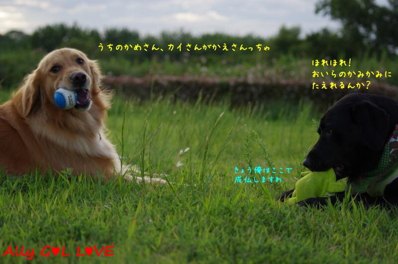 IMGP9334.jpg
