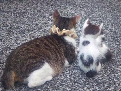銀座 シュシュ猫親子