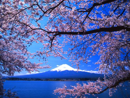 桜花と富士・河口湖