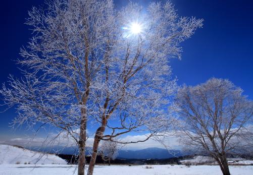 霧氷に輝く太陽