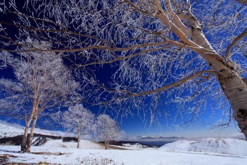 霧氷の花咲く白樺と八ヶ岳