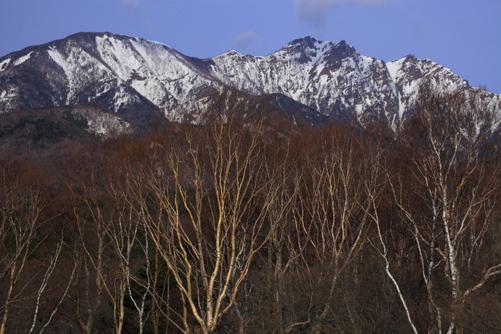 春を待つ岳樺と残雪の権現岳