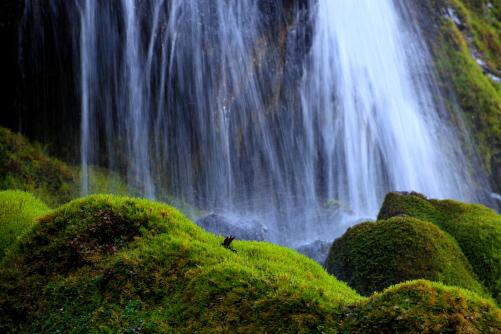 苔むす岩に落水