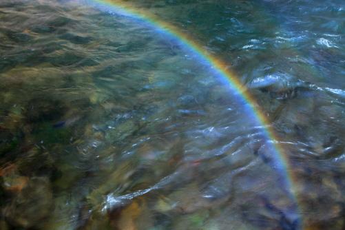 大門川の清流に虹