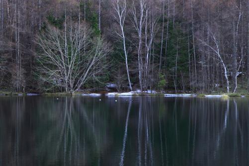 カモのいる静寂神秘な池