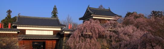 上田城址公園のしだれ桜