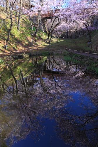 堀に映える桜雲橋