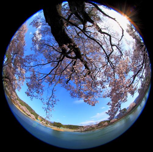 桜咲く六道ノ堤