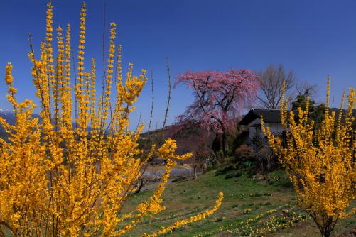 蔵のある春の風景