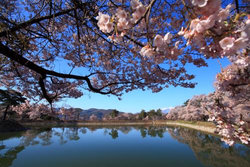 桜咲く堤と空木岳
