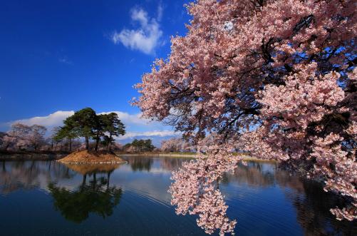 満開の桜と六道ノ堤