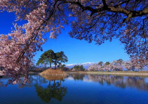 桜の枝越しに西駒ヶ岳と湖畔の桜