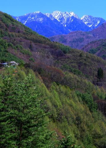 早春の鋸岳
