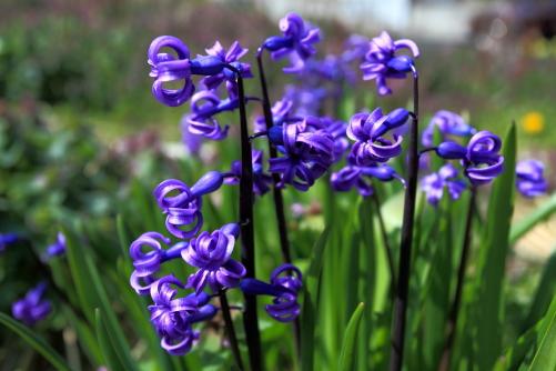 参道に咲いていた花